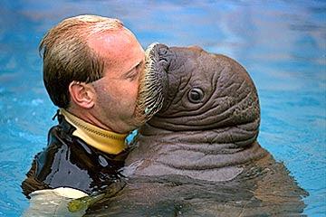 3_walrus_kiss.jpg