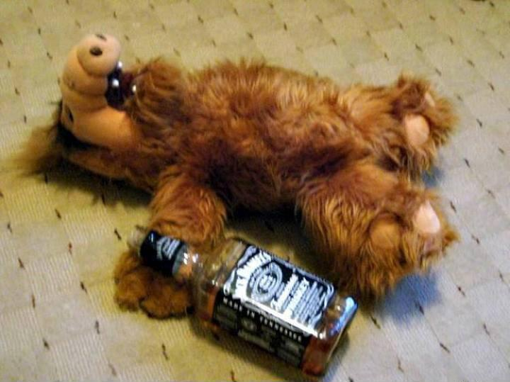alf-ist-betrunken.jpg