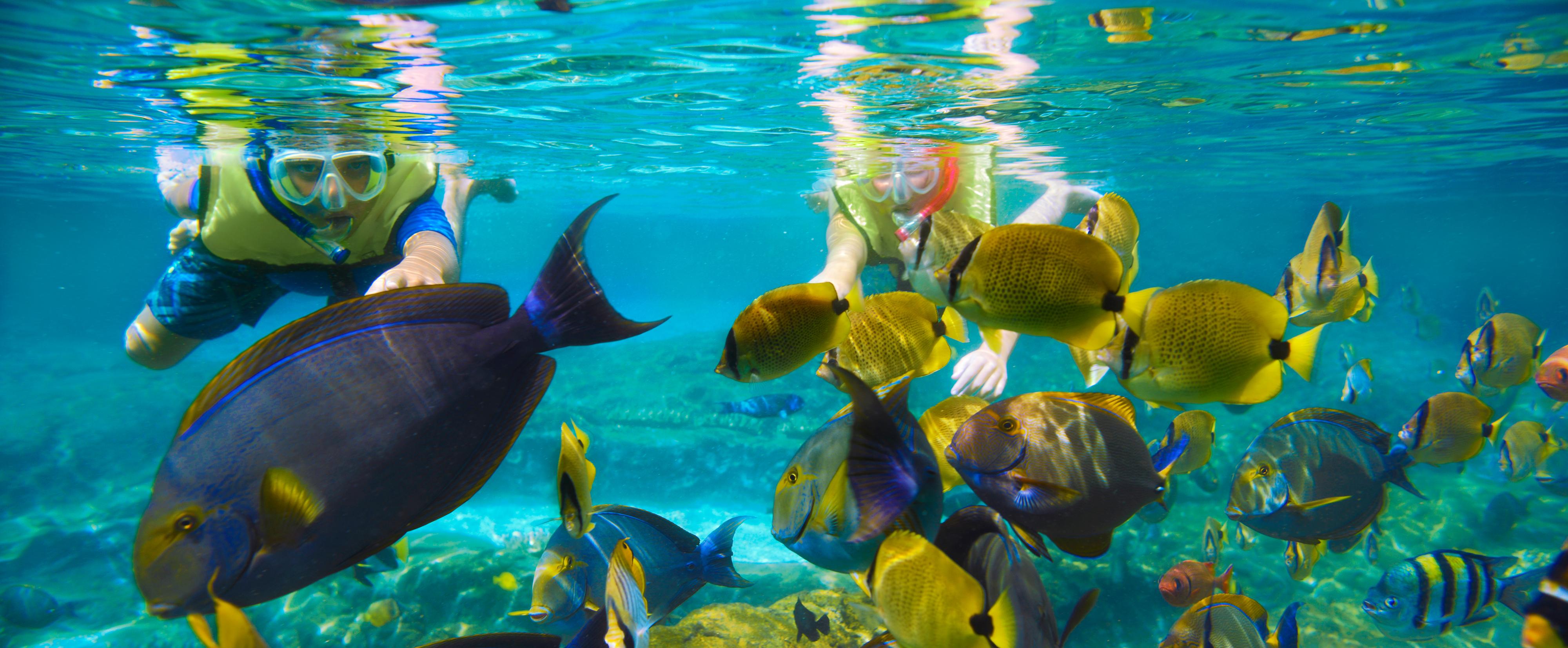 aulani-rainbow-reef-detail-fish-kids-hero.jpg