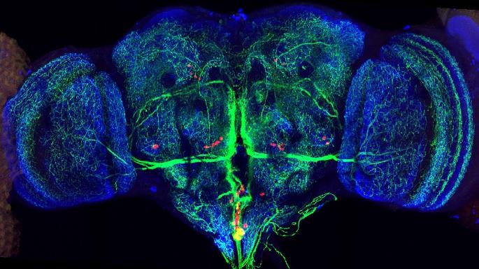 brain_retina-ganglion_685.jpg