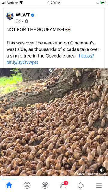 cicadas.png