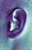 ear_SS36021.jpg