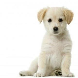 puppy_zpseqnbxn7y.jpg