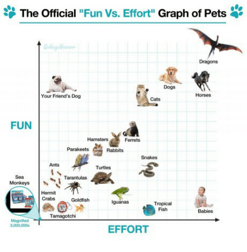 the-official-fun-vs-effort-graph-of-pets-dragons-dogs-30485872.png