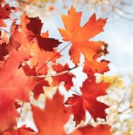 Autumnly
