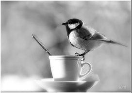 TeaBird