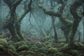 ForestVibes