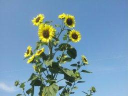 Sunnytime