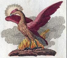 PhoenixAcademy