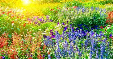 FloralDawn