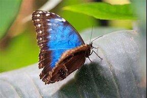 bluebutterfly55